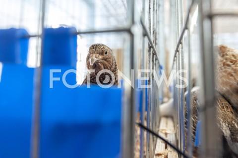 AGENCJA FOTONEWS - 12.05.2019 WARSZAWAWYSTAWA NAJPIEKNIEJSZE KURY SWIATAN/Z BAZANTFOT GRZEGORZ KRZYZEWSKI / FOTONEWS